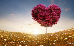 love_heart_tree_fields-wide