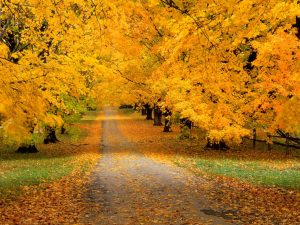 autumn-wallpapers-2