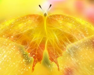 yellow-butterfly